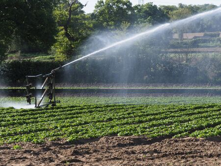 A crop of potatoes being watered by a field irrigation system