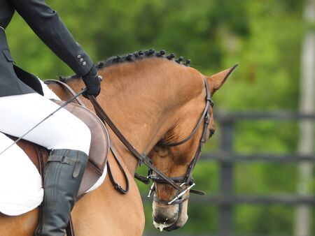 A close up shot of the neck and head of a horse during a dressage test