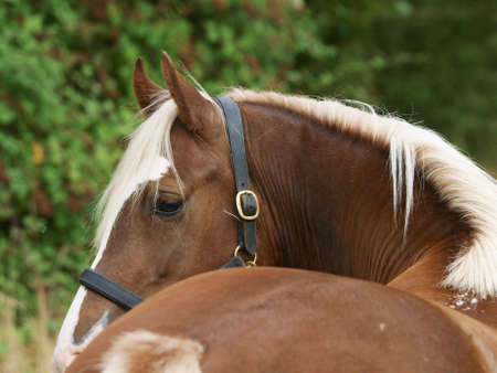 A shot of a chestnut horse shot from behind showing the curve of the neck.