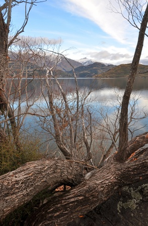 aspiring: Lake Wanaka and Mount Aspiring framed by Willow trees in Winter, Central Otago New Zealand  Stock Photo