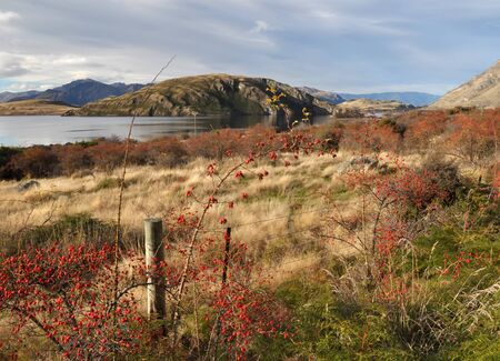 Wild red Rose Hips bushes and berries in Autumn on the shores of Lake Wanaka in Central Otago, New Zealand  Stock Photo - 14193049
