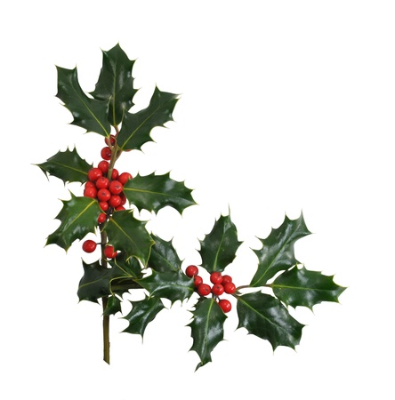 Christmas Holly branches and berries in a corner or border design isolated on a white background.