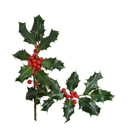 hulst: Hulst van Kerstmis takken en bessen in een hoek of rand ontwerp geà ¯ soleerd op een witte achtergrond.