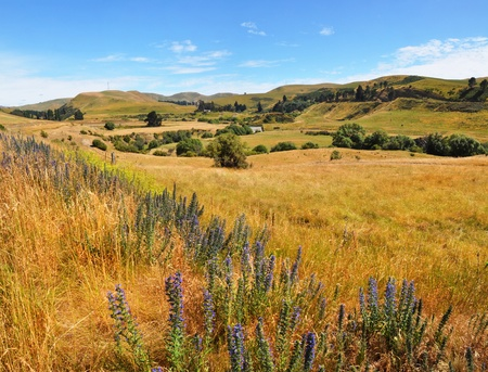 Summertime in the limestone Weka Pass valley near Waikari in North Canterbury, New Zealand  In the foreground are blue and purple wild lupins   photo