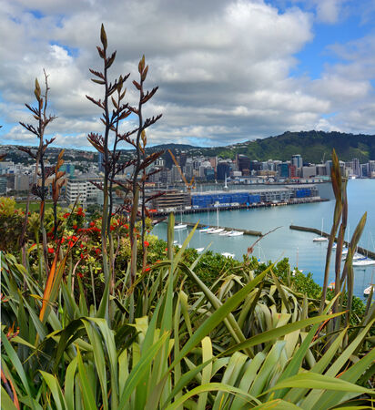 wellington: Flax Flowers   Early Pohutukawa bloom in Oriental Bay with Wellington city   harbour in the background