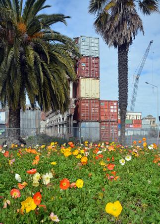 christchurch: Christchurch, New Zealand - September 13, 2014: Spring Flowers Bloom in Deserted Christchurch City CBD.