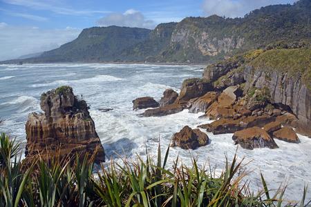 new zealand flax: Looking north from the Punakaiki Rocks up the West Coast towards Karamea, New Zealand