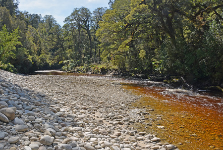 water stained: The Oparara River Near Karamea, West Coast  New Zealand. Note the amazing golden brown Tea colour of the water stained by Tannin from the native trees.