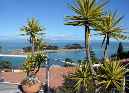 nelson: Haulashore Island viewed between Yucca plants - Nelson New Zealand