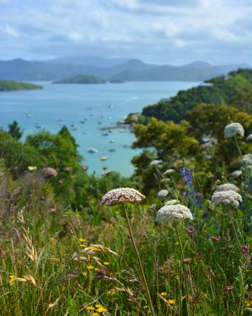 marlborough: Wild Flowers in The Marlborough Sounds, New Zealand.