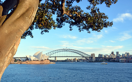 bay bridge: Sydney, Australia - July 17, 2014: View of the Sydney Opera House and Harbour Bridge from under an historic Moreton Bay Fig Tree. Editorial