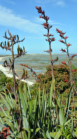 south pacific ocean: Farewll Spit vertical panorama at low tide located at the very top of the South Island, New Zealand. Photo taken from the restaurant at Puponga.This is where the Tasman Sea meets the Pacific Ocean. Flax bushes and flowers in the foreground. Stock Photo