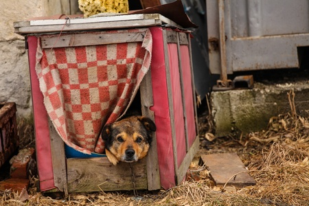 Sad dog looking from a doghouse photo