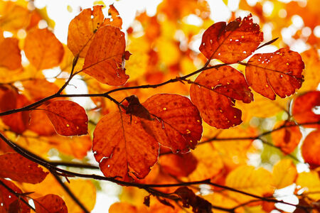 perdido: Yellow leaves on the branch in autumn