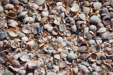Close up of sea shells on the beach, Azov sea, Ukraine Stock Photo