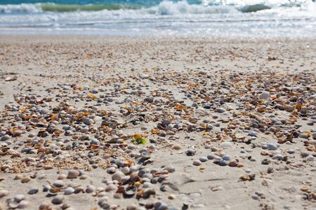 azov sea: Sandy coast line with shells in summer, Azov sea, Ukraine