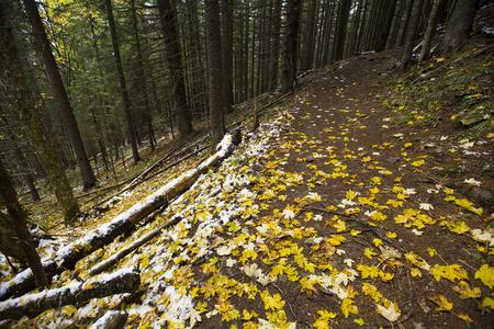autumnn: Passage in the autumnn mountains, Carpathians, Ukraine Stock Photo