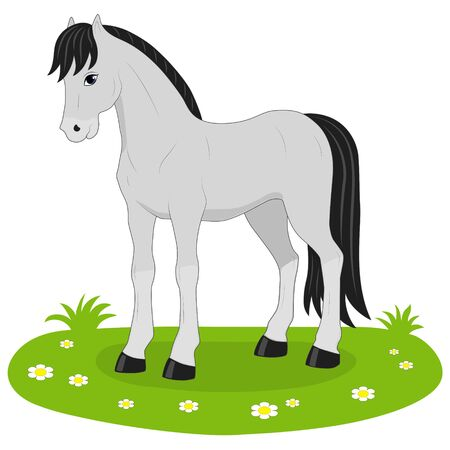 gray: vector illustration gray horse
