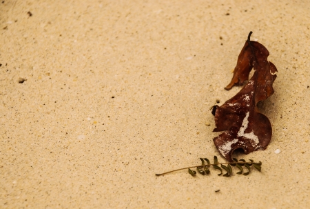 singly: fade leaves on the beach Stock Photo