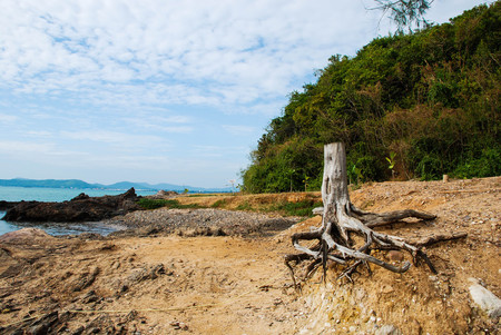 singly: tree stump at the seaside