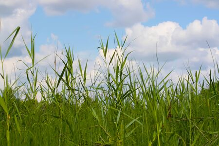 thickets: sedge thickets near the lake