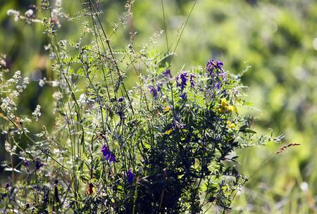 fleurs des champs: Wildflowers