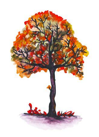 水彩の秋木 写真素材