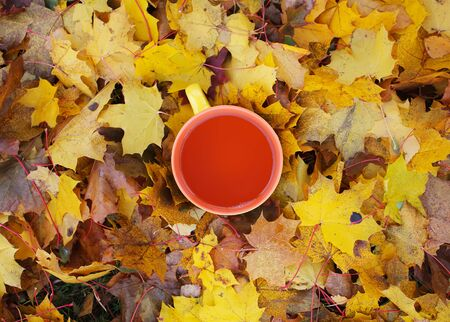 Cup of tea on yellow leaves background