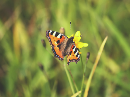 Small butterfly sitting on flower in summer field Stock Photo