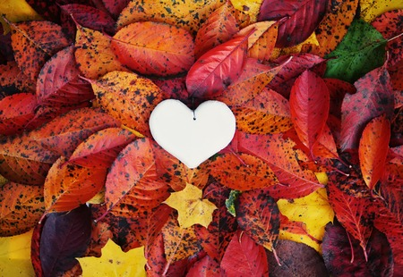 Decorative handmade heart on colorful autumn leaves Stock Photo