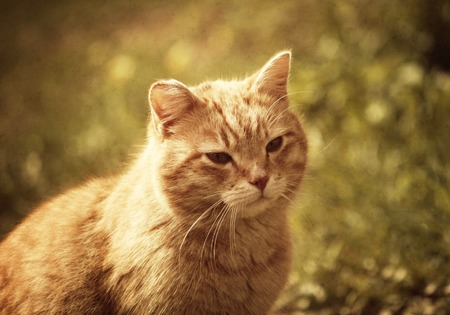 Portrait of green-eyed cat on nature background. Vintage toned image. Stock Photo