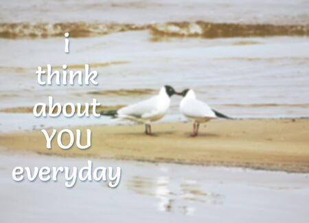 about you: Card with lettering I think about you everyday on blurred nature background with two seagulls.