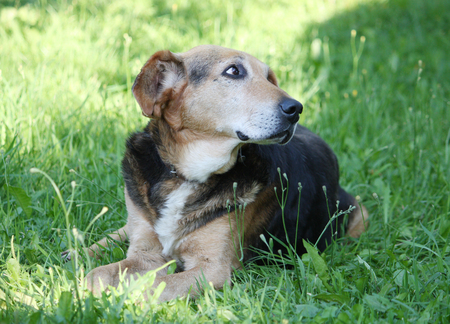Funny dog sitting on a green grass