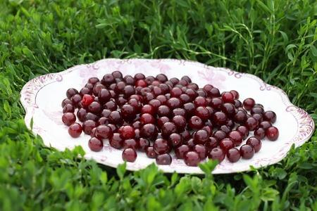 Red ripe fresh cherries close up outdoors