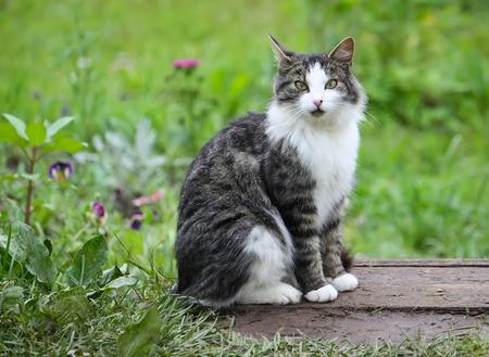 cola mujer: Retrato del gato de ojos verdes en el fondo la naturaleza