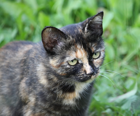 Portrait of green-eyed cat on nature background Stock Photo