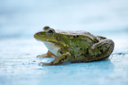 Green frog sitting on a wooden boards outdoors Stock Photo