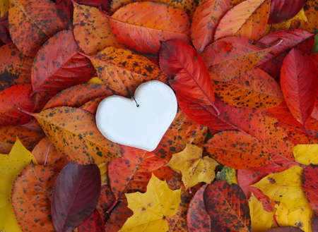 Decorative white handmade heart on autumn leaves background.