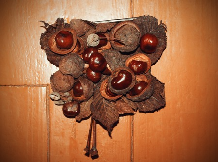 horse chestnuts: Ripe horse chestnuts on wooden floor background