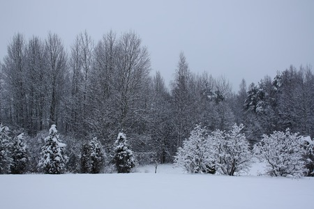 Winter landscape in Latvia with forest and fields