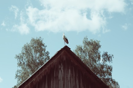 bird       s house: Stork on the roof of the old cowshed in the village. Vintage toning.