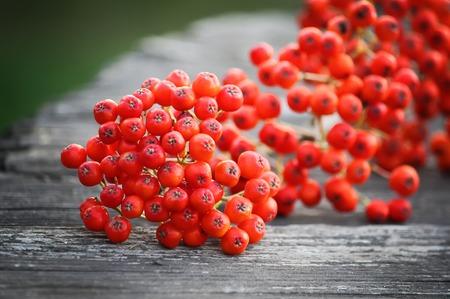 Rowan berries on vintage wooden boards outdoors Stock Photo