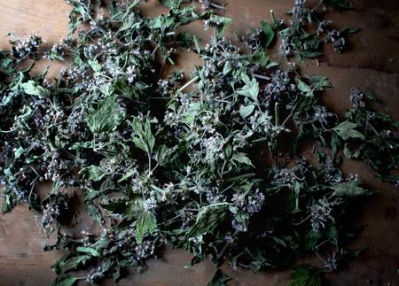 shaggy: Flowers of a motherwort shaggy five-bladed. Leonurus quinquelobatus L.