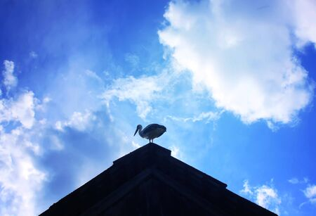 roof ridge: White stork on the roof of a house Stock Photo