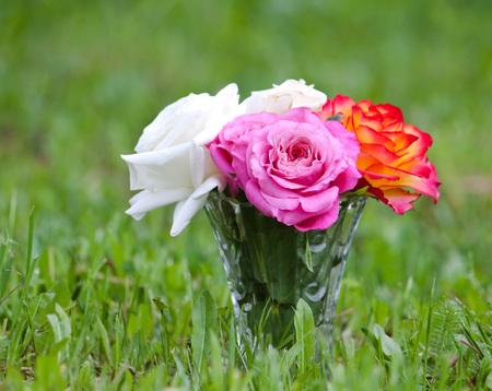 bourgeon: Beautiful rose flowers in sunlight close up Stock Photo
