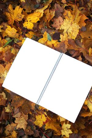 Blank paper on fall autumn leaves on the ground