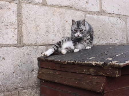 grey eyed: Green eyed cat sitting on the wooden doghouse outdoors