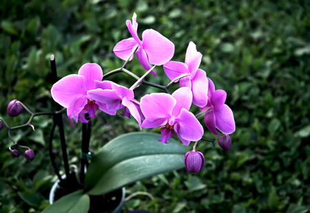 Beaitiful blooming purple orchid flower on summer nature background Stock Photo