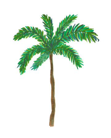 nature one painted: Hand painted watercolor illustration of palm tree.