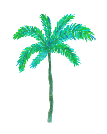 Hand painted watercolor illustration of palm tree.